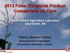 2013 Foliar Fungicide Product Comparison on Corn South