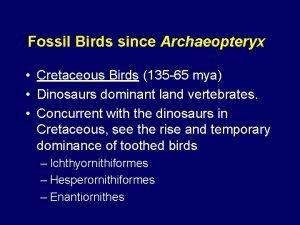 Fossil Birds since Archaeopteryx Cretaceous Birds 135 65