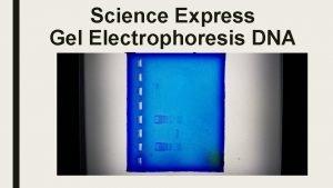 Science Express Gel Electrophoresis DNA Extension This gel