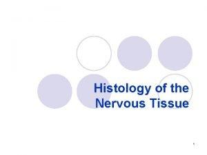 Histology of the Nervous Tissue 1 nervous system