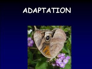 ADAPTATION Terms related to Adaptation A trait that