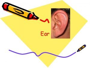 Ear Structure and function The ear consists of