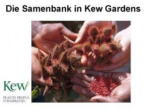Die Samenbank in Kew Gardens Sammeln im Freiland