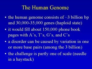 The Human Genome the human genome consists of