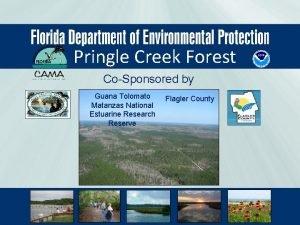 Pringle Creek Forest CoSponsored by Guana Tolomato Matanzas