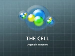 THE CELL Organelle Functions Cell Membrane Controls the