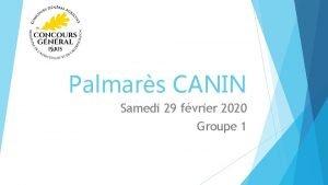 Palmars CANIN Samedi 29 fvrier 2020 Groupe 1