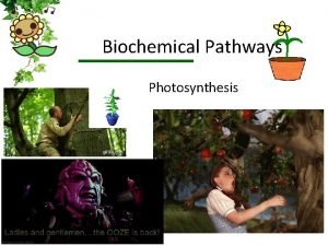 Biochemical Pathways Photosynthesis Photosynthesis What do we know