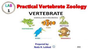 Practical Vertebrate Zoology Prepared by Nada H Lubbad
