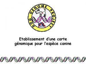 Etablissement dune carte gnomique pour lespce canine Plan
