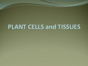 PLANT CELLS and TISSUES PLANT CELLS PLANT TISSUES