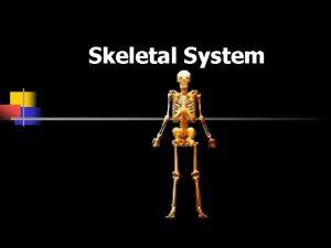 Skeletal System Skeletal System 206 bones Functions n