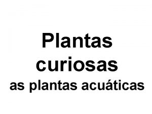 Plantas curiosas as plantas acuticas As plantas acuticas
