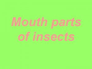 Mouth parts of insects The mouth parts of