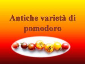 Antiche variet di pomodoro Antiche variet di pomodoro
