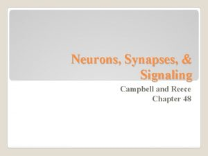 Neurons Synapses Signaling Campbell and Reece Chapter 48