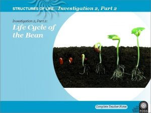 STRUCTURES OF LIFEInvestigation 2 Part 2 Life Cycle