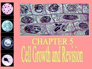 Stomach lining cells 2 days Platelets 10 days