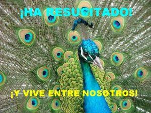 HA RESUCITADO Y VIVE ENTRE NOSOTROS PORQUE RESUCITAR