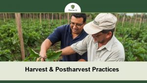 Harvest Postharvest Practices Welcome Basic Harvest Postharvest Handling