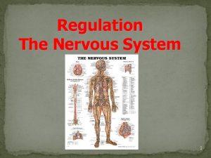 Regulation The Nervous System 1 Regulation is the