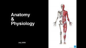 Anatomy Physiology July 2020 Anatomy Physiology The study