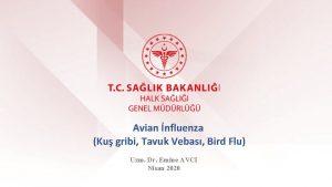 Avian nfluenza Ku gribi Tavuk Vebas Bird Flu