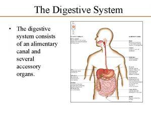 The Digestive System The digestive system consists of