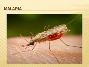 MALARIA WHAT IS MALARIA Begins with a mosquito