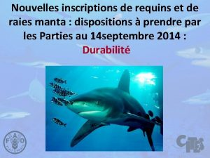 Nouvelles inscriptions de requins et de raies manta