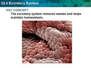 32 4 Excretory System KEY CONCEPT The excretory