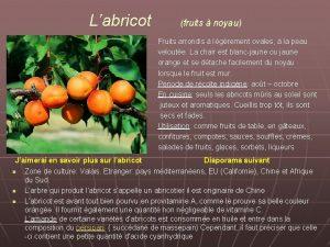 Labricot fruits noyau Fruits arrondis Igrement ovales la
