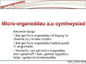 Microorganeddau au cymhwysiad Amcanion dysgu Bod gan ficroorganeddau
