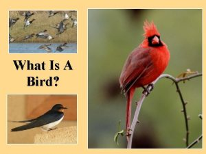What Is A Bird What is a Bird