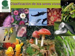 Clasificacin de los seres vivos Introduccin La taxonoma