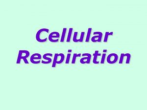 Cellular Respiration Cellular respiration is releasing energy from