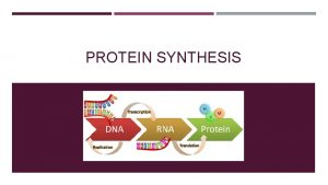 PROTEIN SYNTHESIS PROTEIN SYNTHESIS So how do the