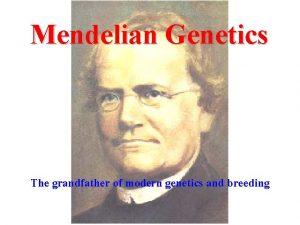 Mendelian Genetics The grandfather of modern genetics and