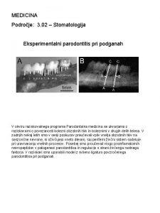 MEDICINA Podroje 3 02 Stomatologija Eksperimentalni parodontitis pri