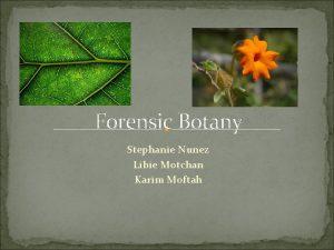 Forensic Botany Stephanie Nunez Libie Motchan Karim Moftah