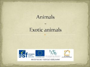Animals Exotic animals Animals Exotick zvata Z a