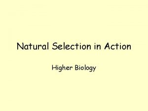 Natural Selection in Action Higher Biology Natural Selection