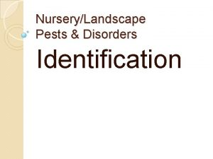 NurseryLandscape Pests Disorders Identification Insects 217 Aphid Wikimedia