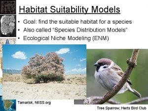 Habitat Suitability Models Goal find the suitable habitat