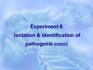 Experiment 6 Isolation identification of pathogenic cocci The