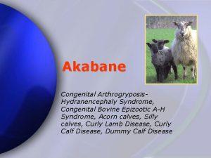 Akabane Congenital Arthrogryposis Hydranencephaly Syndrome Congenital Bovine Epizootic