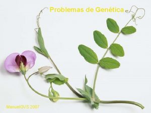 Problemas de Gentica Manuel GVS 2007 PROBLEMAS DE