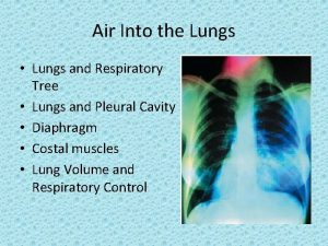 Air Into the Lungs Lungs and Respiratory Tree