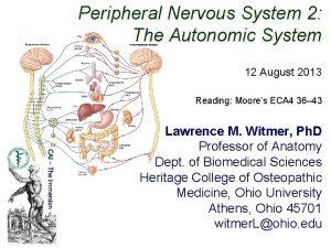 Peripheral Nervous System 2 The Autonomic System 12