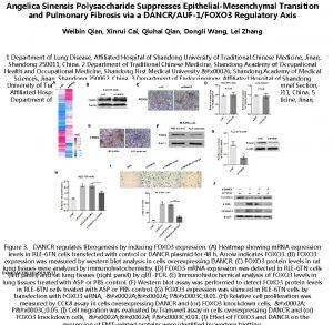 Angelica Sinensis Polysaccharide Suppresses EpithelialMesenchymal Transition and Pulmonary